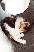 istock Kitten sleeps 2 1250579352