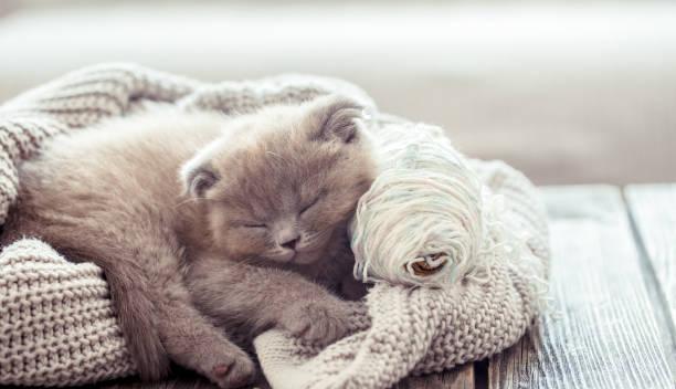 Kitten sleeps on a sweater picture id995687954?b=1&k=6&m=995687954&s=612x612&w=0&h=xg1lqfpzy 2uefpoovyfux sgrpf1hsgir6wviwwcsa=
