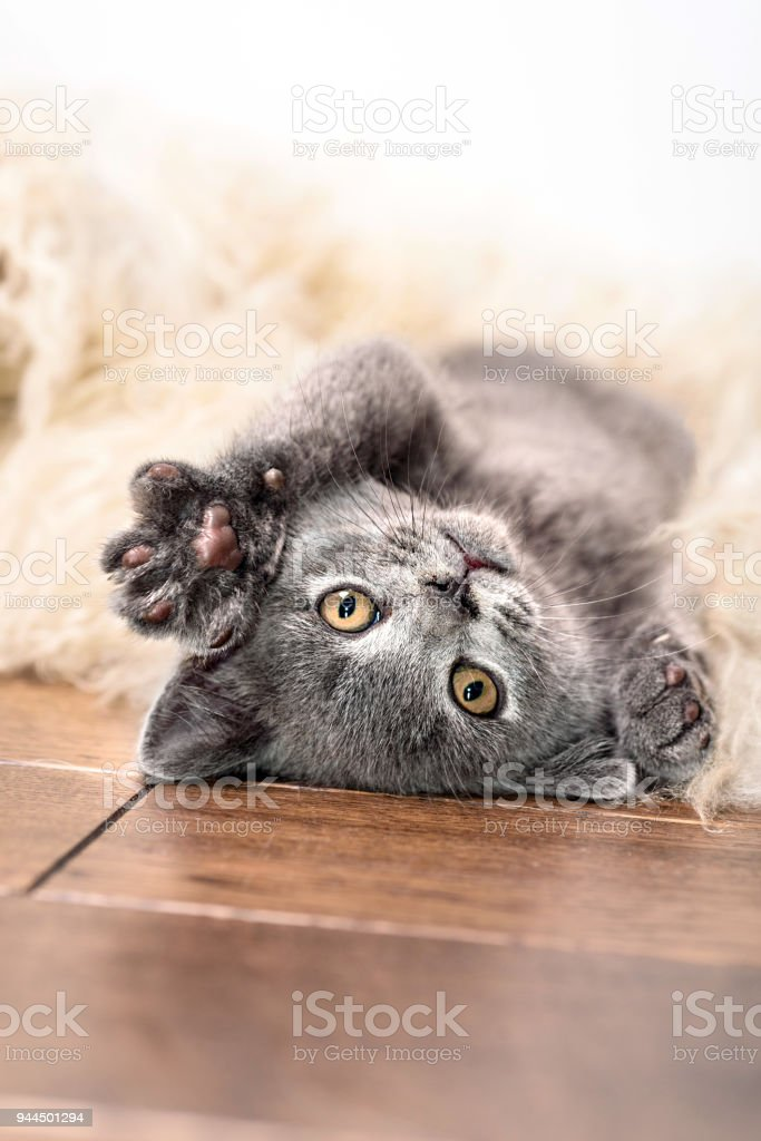 kitten sleeps on fur stock photo