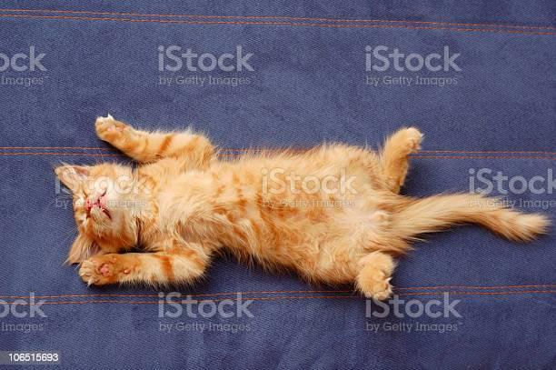 Kitten sleeps on the back picture id106515693?b=1&k=6&m=106515693&s=612x612&h=tcs17isziqnhac2qhp kjj7cbtxstkvjxfdvmsivhjw=