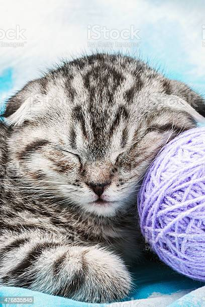Kitten sleeps on the tangles of yarn picture id476835845?b=1&k=6&m=476835845&s=612x612&h=dulpbgb2cuy7vrggk0x6zxeevodnsh599ddn u0gbhu=