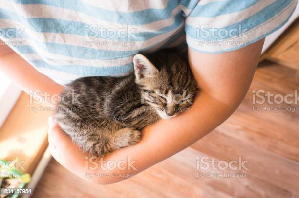 Kitten slip on the arm of the boy picture id834157954?b=1&k=6&m=834157954&s=612x612&h=zlywf3 zbsgh qli3mu2exqzbh2shasedyxoe d9kjo=