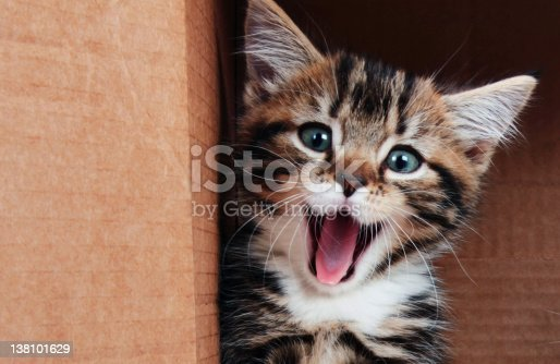 istock Kitten smiling 138101629
