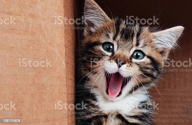 Kitten smiling picture id138101629?b=1&k=6&m=138101629&s=612x612&h=tlr0g3zotehawbu66rphcsrroza6c6g lqczen6gyia=