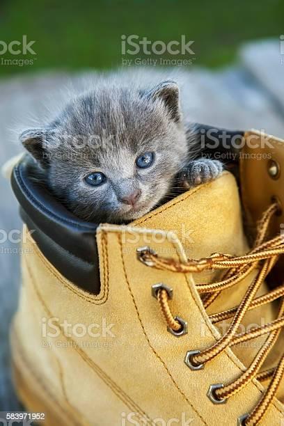 Kitten smoky color picture id583971952?b=1&k=6&m=583971952&s=612x612&h=uywwmoa5lxhc xnwsyg5szatiiuam33kinnclzprcpo=