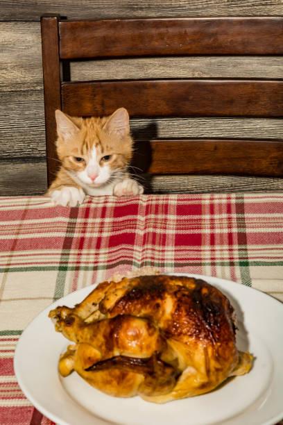 Kitten stealing holiday dinner picture id1133808574?b=1&k=6&m=1133808574&s=612x612&w=0&h=41hdpj1qqwe6fwonwqtzoiux8ennicxk1tx8i2bcyua=