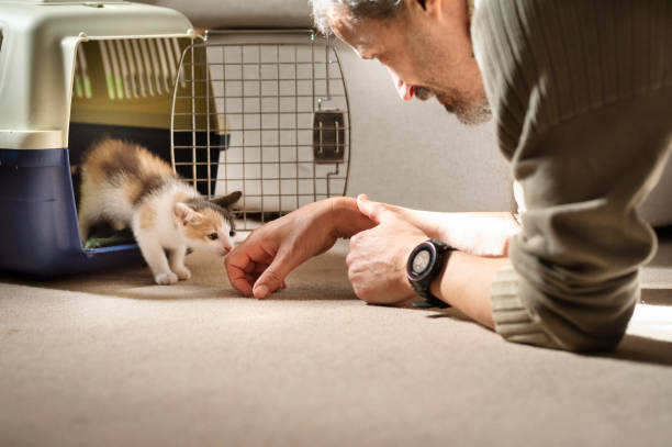 Kitten taking his first steps into his new forever home stock photo