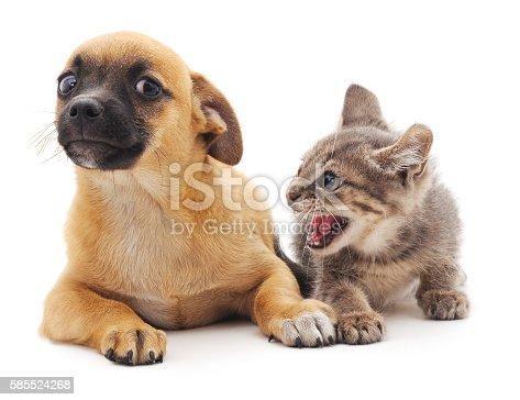 istock Kitten that screams at puppy. 585524268