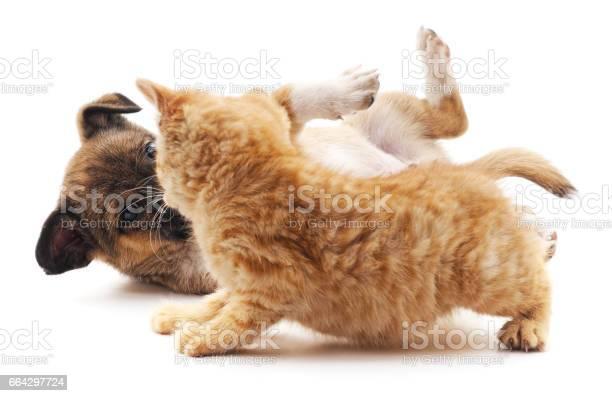 Kitten that screams at puppy picture id664297724?b=1&k=6&m=664297724&s=612x612&h=hcfobq ymy2fju eprr6czukds kqty3txzge6raffi=