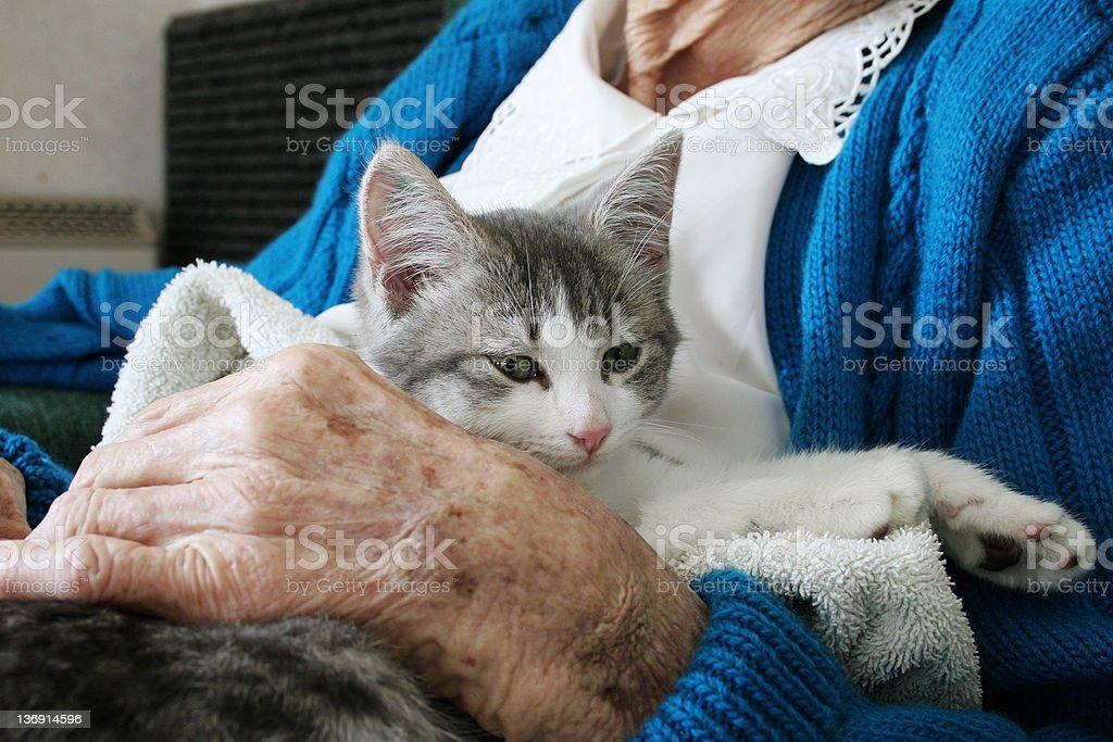 Kitten therapy stock photo