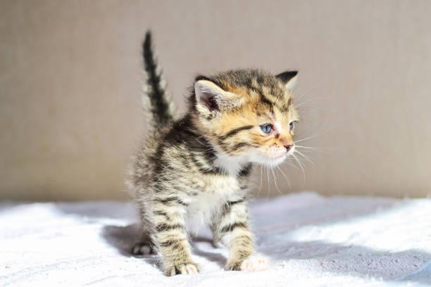 Kitten, Ukraine – Foto