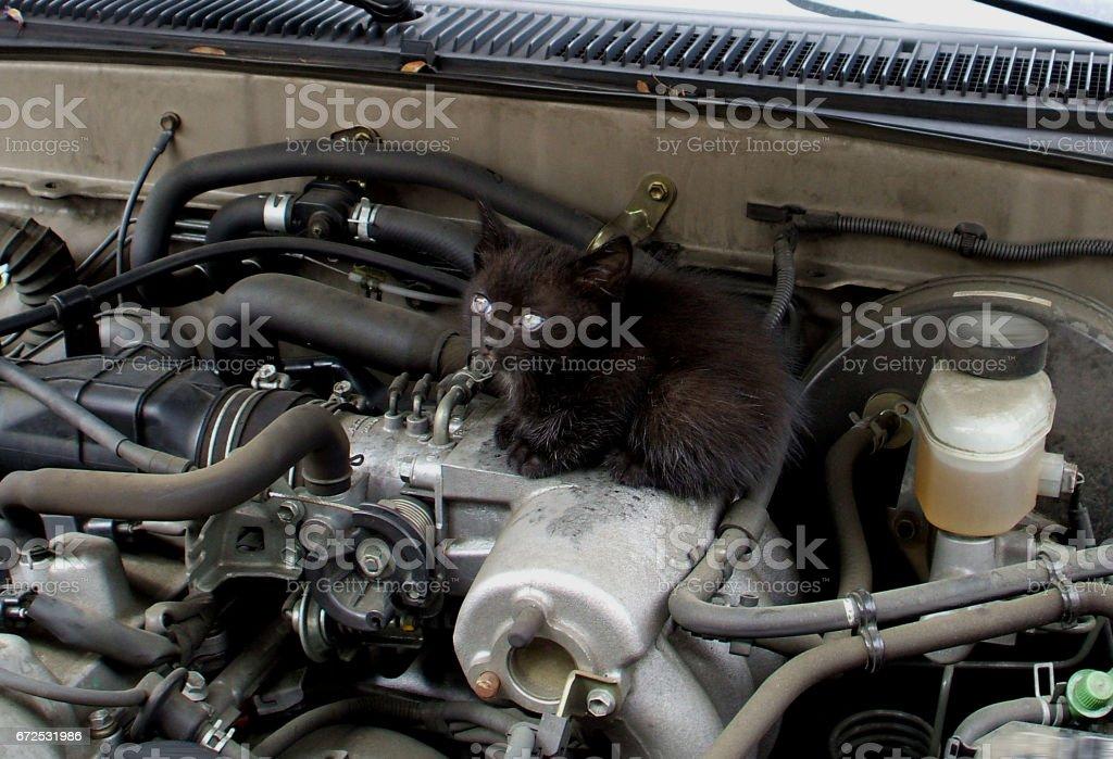 A Kitten Under the Hood stock photo