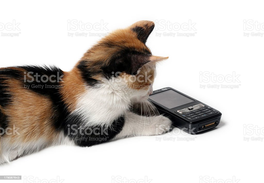 Kitten waiting for a call stock photo