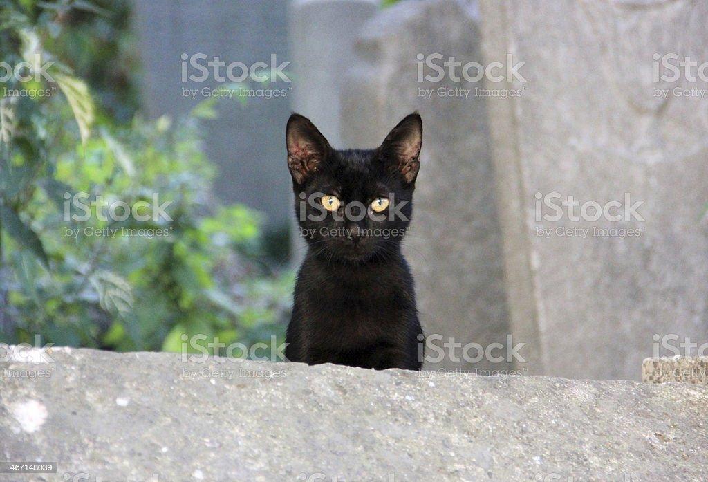 kitten walks on the wall stock photo