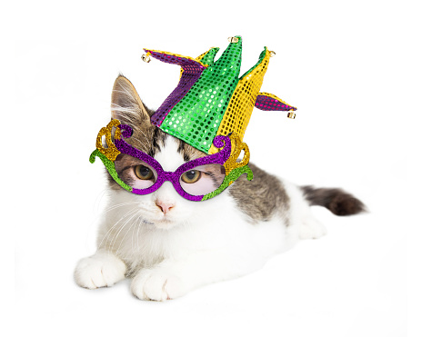 Kitten Wearing Mardi Gras Hat and Glasses