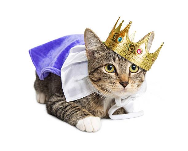 Hasil gambar untuk king cat