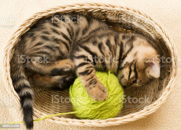 Kitten winds a ball of threads lying in a goat picture id698325336?b=1&k=6&m=698325336&s=612x612&h=n1mqggxi3iub1bm7f6rqnjqx5akh92j768nzsaymele=