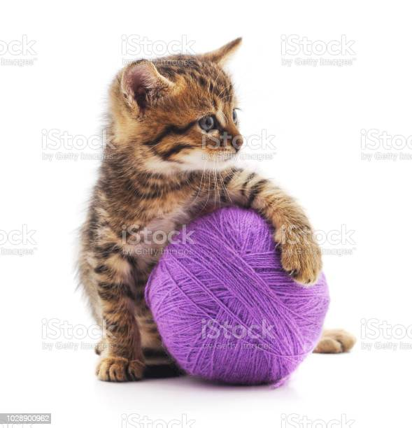 Kitten with a ball picture id1028900962?b=1&k=6&m=1028900962&s=612x612&h=r4rp1 vitt1mfdurnng qh m9rqaqaiahhapazvs 8k=