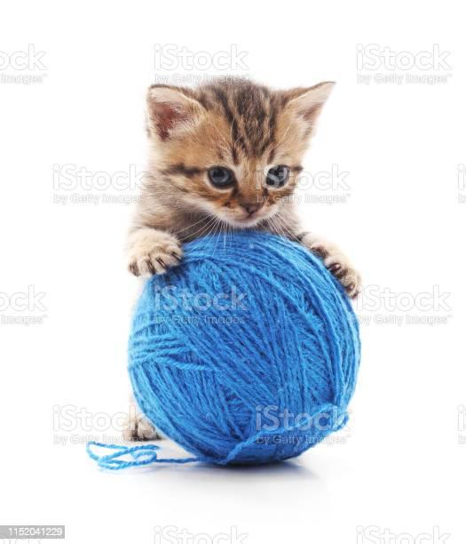 Kitten with a ball picture id1152041229?b=1&k=6&m=1152041229&s=612x612&h=j3oypjrvsbfe04ufw6p2o8chod6krvvncqw0ny1idio=