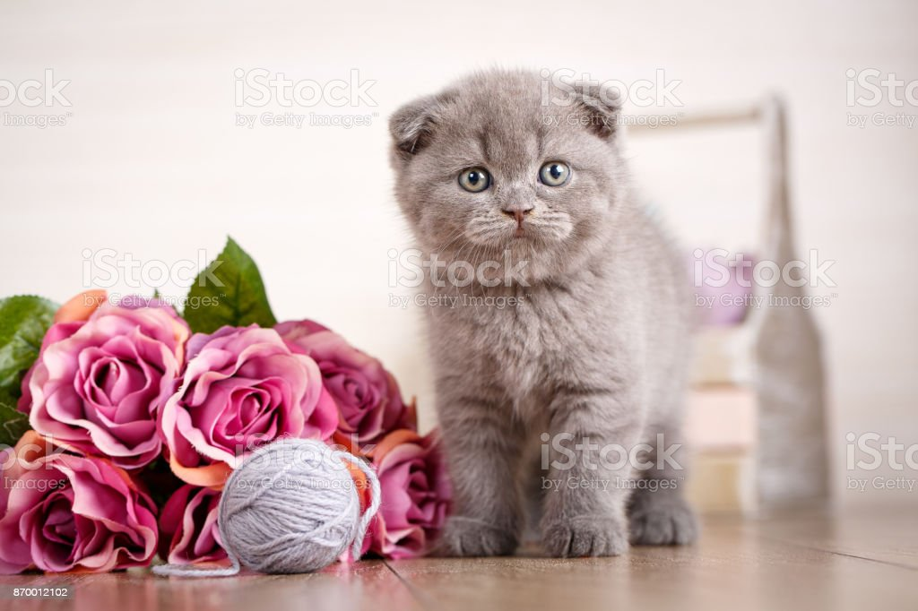 A kitten with a bouquet of roses is playing with ball thread. stock photo