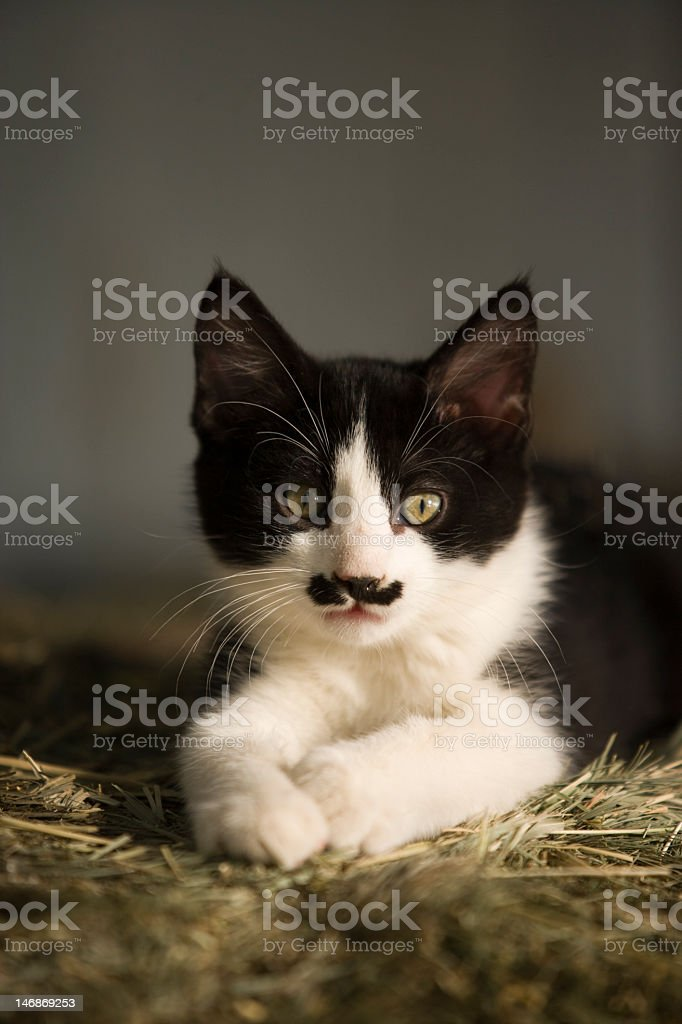 Kitten with a cute 'mustache' stock photo