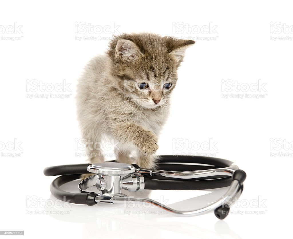 kitten with a stethoscope royalty-free stock photo