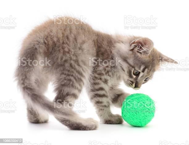 Kitten with ball of yarn picture id1066200412?b=1&k=6&m=1066200412&s=612x612&h=motvcp2vphuw2jfoq lyj8ap6x02czbt4srseez7qao=