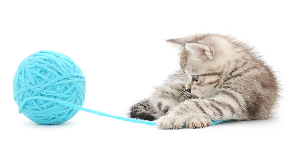 Kitten with ball of yarn picture id460095299?b=1&k=6&m=460095299&s=612x612&w=0&h=vjtokt82wbnrzhp9w19ib98xm9xrqqa  xfq ti9s9y=