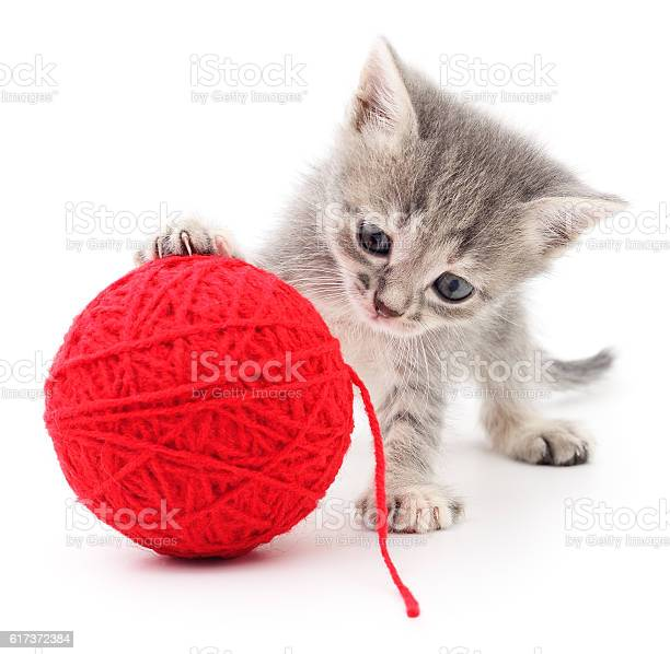 Kitten with ball of yarn picture id617372384?b=1&k=6&m=617372384&s=612x612&h=kiotqmsowb5zemdecivynwxfachalfqvewkrk g8koc=