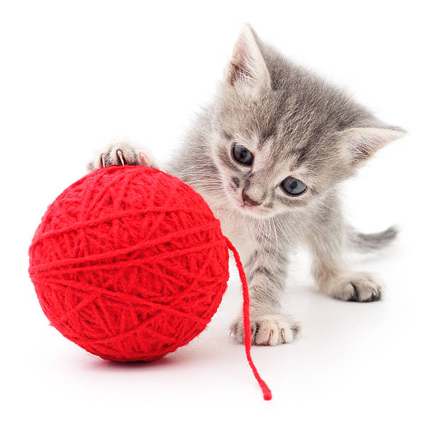 Kitten with ball of yarn picture id617372384?b=1&k=6&m=617372384&s=612x612&w=0&h=mygedhgvnnzdstvadvdzhy2prf4qj89yemckvhjwhpq=