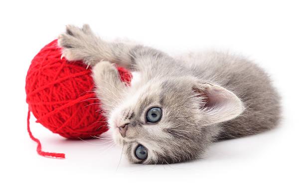 Kitten with ball of yarn picture id617373610?b=1&k=6&m=617373610&s=612x612&w=0&h=lgglpvqdzh6ozgk4aap922ttamzgqj0psuh 1a0uzvo=
