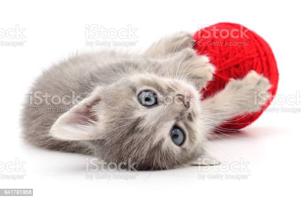 Kitten with ball of yarn picture id641761958?b=1&k=6&m=641761958&s=612x612&h=uhnupb5kvkpmaxz65a tib48j2qzvpkvwyoc14lrdr8=