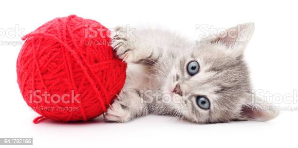 Kitten with ball of yarn picture id641762166?b=1&k=6&m=641762166&s=612x612&h=cyvenkixiqkhg1nz0ytbtjrgoqk5lgcgulyilvoduaw=