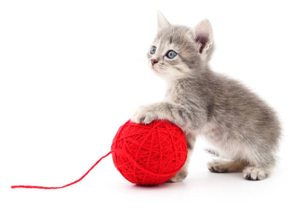 Kitten with ball of yarn picture id643021034?b=1&k=6&m=643021034&s=612x612&w=0&h=mrvfzhmtzntzqviylptvf i8aipz07h phztgzkl9ya=