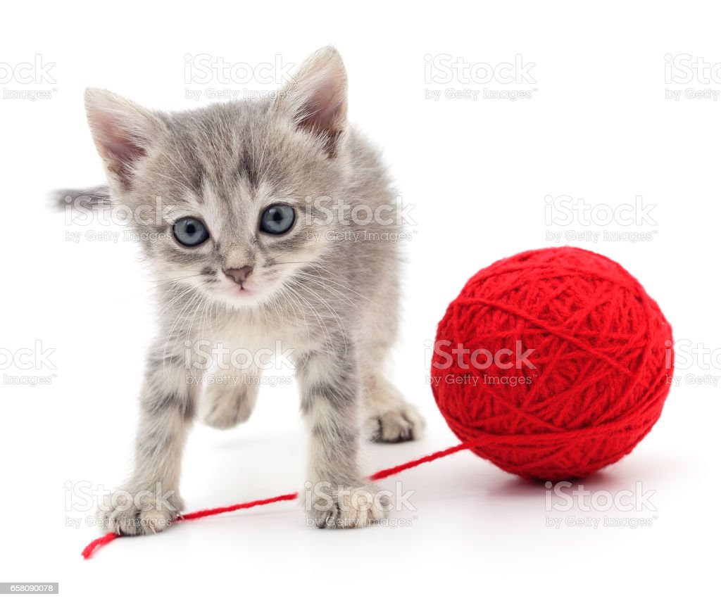 Kitten with ball of yarn. royalty-free stock photo