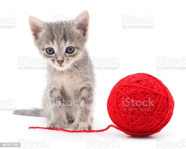 Kitten with ball of yarn picture id661817082?b=1&k=6&m=661817082&s=612x612&h=bfc6x6x27plpyxzumdnldy9ulne8irzfvnwxehjalpc=