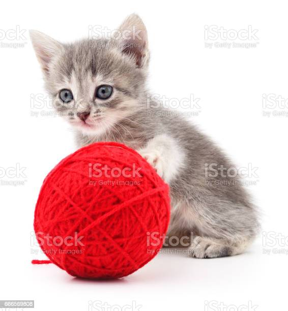 Kitten with ball of yarn picture id666569808?b=1&k=6&m=666569808&s=612x612&h=v l  6l  iekiyjjisfnglqfsci3dy0b ldgdxoakp0=