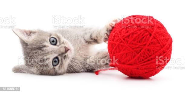 Kitten with ball of yarn picture id671995210?b=1&k=6&m=671995210&s=612x612&h=2mmxrdlt56jrkqpbz4wxe1qurouczzh8cx1iwbqku78=