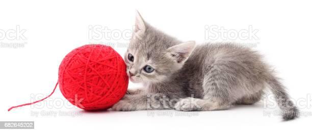 Kitten with ball of yarn picture id682645202?b=1&k=6&m=682645202&s=612x612&h=oj jbljfjndeahitlhph7msqsbfsum6yxgo bhialf0=