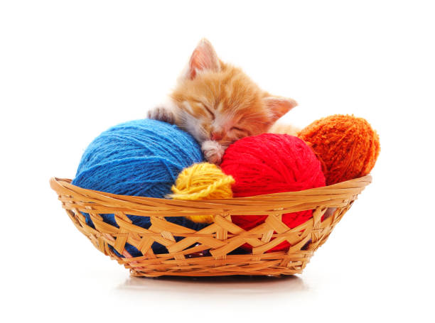 Kitten with balls of yarn in the basket picture id1190558288?b=1&k=6&m=1190558288&s=612x612&w=0&h=zkkdkcqvpdaiqmfsw95a9tqn4aybqlgxlv8 08602js=