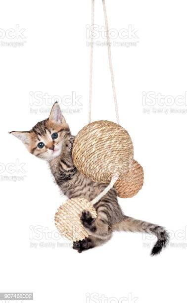 Kitten with balls picture id907466002?b=1&k=6&m=907466002&s=612x612&h=fvx4mgxn0qrql1ua7cjrh jioyyts3xem2v6c8zabos=