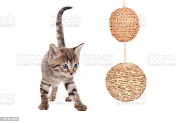 Kitten with balls picture id907466008?b=1&k=6&m=907466008&s=612x612&h=d4qmkv 0se51o19nomklq3 3 btoh86vgtwoqukofau=