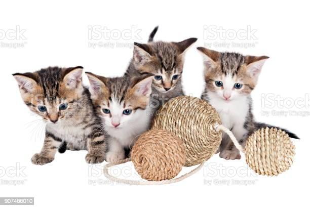 Kitten with balls picture id907466010?b=1&k=6&m=907466010&s=612x612&h=fh8e9zwdtq4nuo95z1hcjaa1q2ioyaiwwbs 9gb087k=