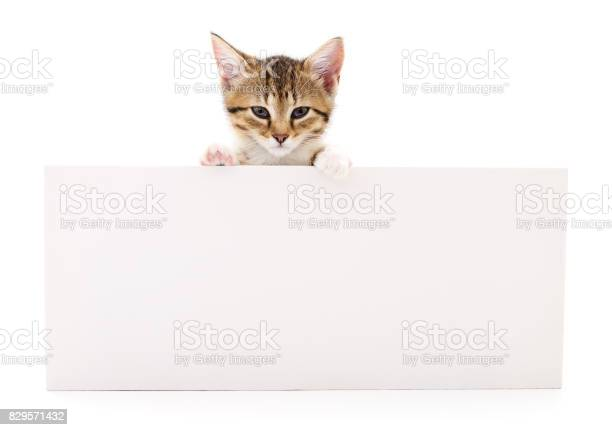Kitten with blank picture id829571432?b=1&k=6&m=829571432&s=612x612&h=rbco1vqxucx0dynl6pqtdblyfv1ovpffedlbqcvjeac=