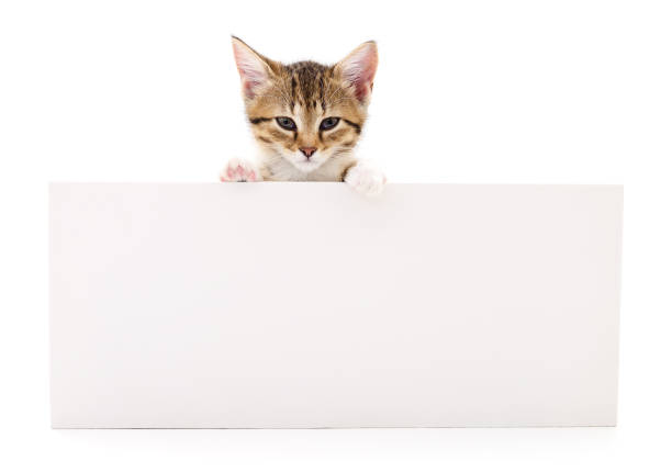 Kitten with blank picture id829571432?b=1&k=6&m=829571432&s=612x612&w=0&h=edtiure7v npb wzzl5aoyxrqbq78hiti2lsjrkbpbo=