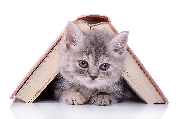 Mascota con libro - foto de stock