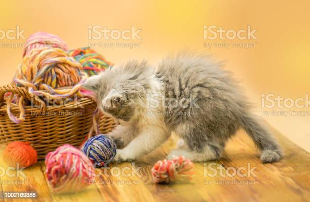 Kitten with colorful wool yarn balls picture id1002169388?b=1&k=6&m=1002169388&s=612x612&h=r7bj7esvm94vuo6k kutiofzovjy y fsdglxmiz4ik=