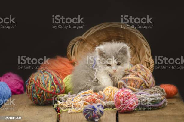 Kitten with colorful wool yarn balls picture id1062094006?b=1&k=6&m=1062094006&s=612x612&h=4c1rdsibjckxk2gxkof4ap7l0ihwqcxklkwd6 zkalk=
