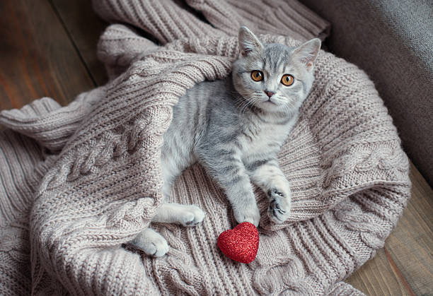 kitten with heart in on Valentine's Day kitten with heart in on Valentine's Day kitten cute valentines day domestic cat stock pictures, royalty-free photos & images