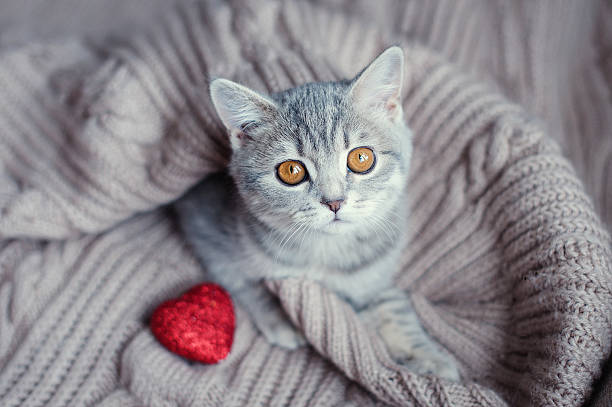 Kitten with heart in on valentines day picture id506785620?b=1&k=6&m=506785620&s=612x612&w=0&h=fem4g5  qvv6ifhtp4toncrh3gqodhxyitqsdf3 0kg=